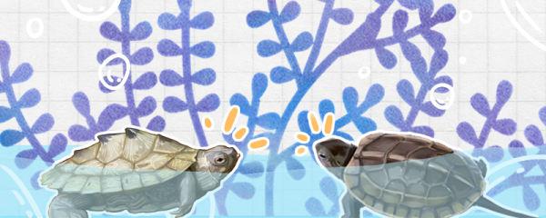 地图龟和草龟可以放一个缸里养吗,可以和黄耳龟一起养吗