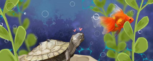 地图龟能和鱼一起养吗,能和什么鱼一起养