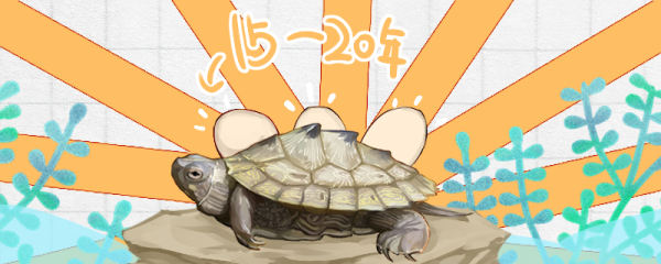 地图龟能活多久,多久能下蛋