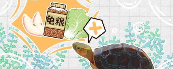 黄缘闭壳龟不吃东西是什么原因,怎么治疗