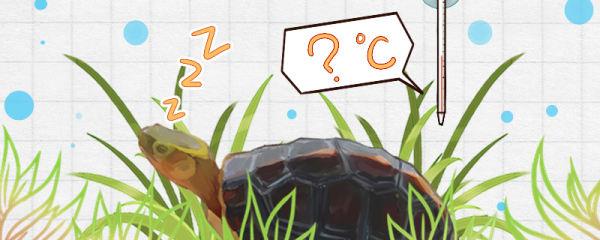 黄缘闭壳龟多少度冬眠,冬眠什么时候结束