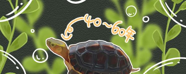 黄缘闭壳龟寿命多长,多少年性成熟