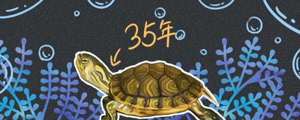 黄耳龟能活多少年,多大算成年