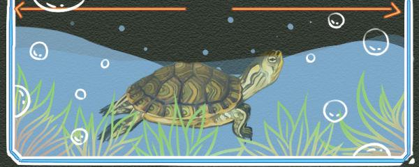 黄耳龟是深水龟吗,用多深的水养合适