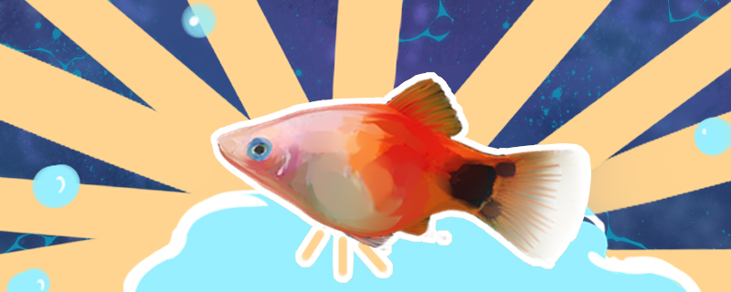 观赏鱼什么时候产卵,观赏鱼产子注意事项-轻博客
