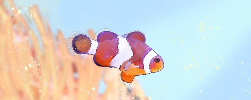 鱼会饿死吗,鱼多久不吃东西会饿死