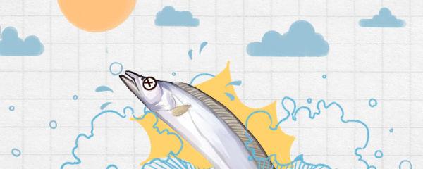 带鱼出水有不死的吗,为什么没有鱼鳞