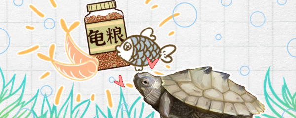 地图龟吃什么,多久喂一次