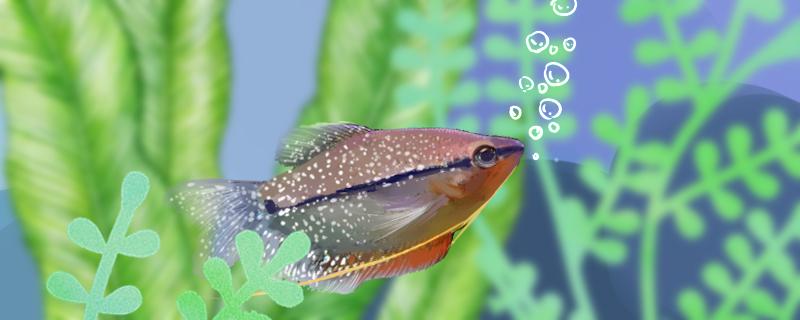 鱼有记忆力吗,鱼的记忆有多久-轻博客