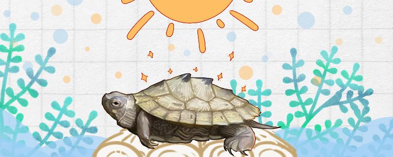 地图龟需要晒太阳吗,需要晒背灯吗