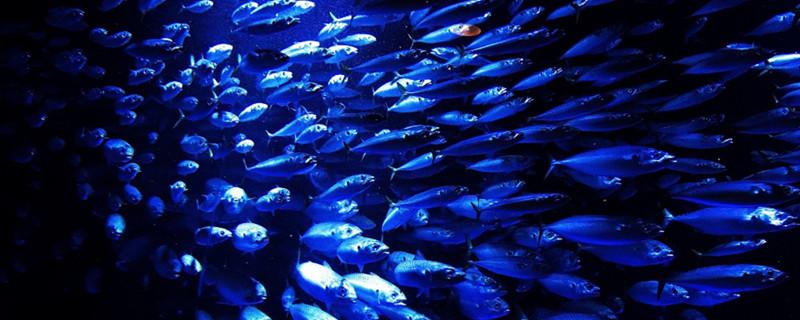 鱼为什么会跳出鱼缸,鱼老是跳出鱼缸怎么办-轻博客