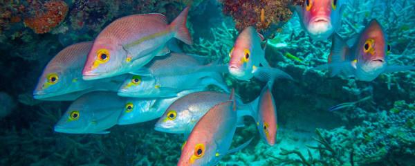 鱼的年龄怎么看,鱼鳞怎么判断鱼的年龄