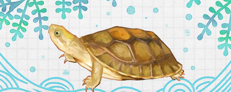 闭壳龟好养吗,怎么养