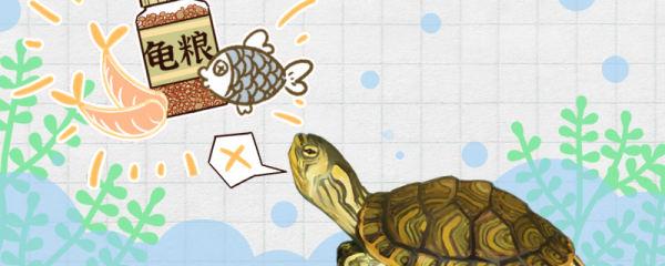 黄耳龟不吃食是什么原因,怎么治疗