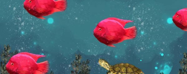 黄耳龟能和鱼混养吗,能和什么鱼混养