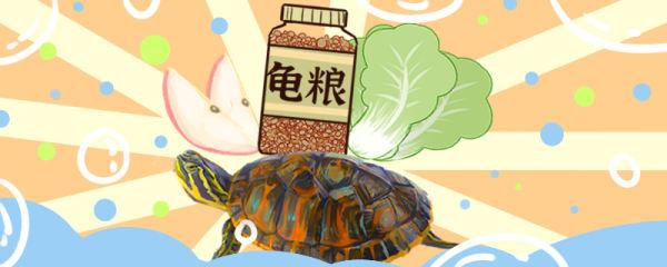 火焰龟吃什么,多久喂一次