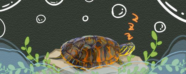 火焰龟冬眠要怎么准备,冬眠什么时候结束