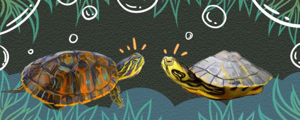 火焰龟和黄耳龟有什么区别,能一起养吗