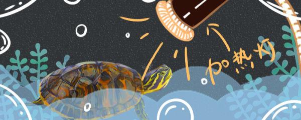 火焰龟的养殖方法,养火焰龟的注意事项
