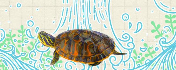 火焰龟是深水龟吗,水太深会淹死吗