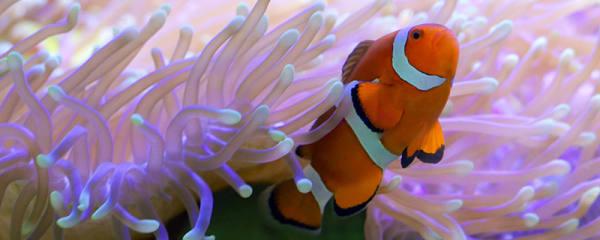 海水鱼能在淡水生存吗,海鱼能在淡水养吗