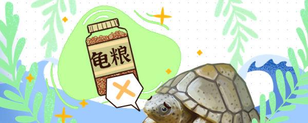 剃刀龟不吃东西怎么是什么原因,怎么治疗