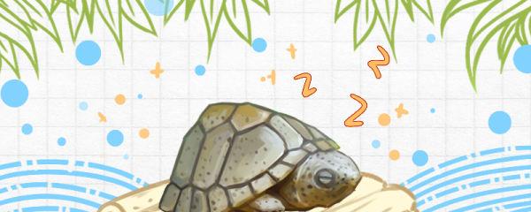 剃刀龟能冬眠吗,冬眠需要换水吗