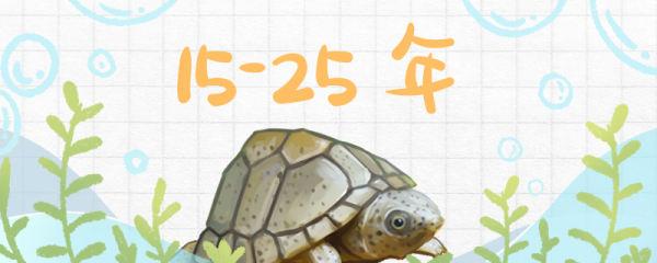 剃刀龟寿命有多长,多大算亚成