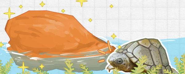 剃刀龟需要晒台吗,需要黄蜡石吗