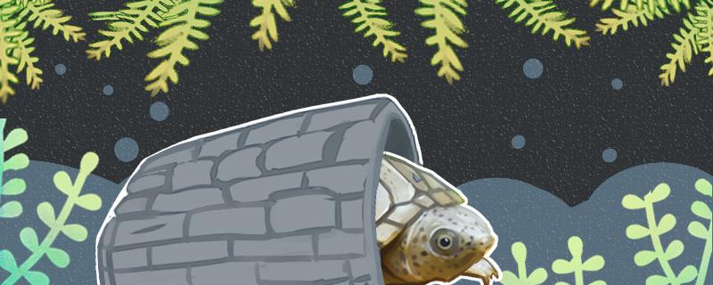 剃刀龟怎么养,需要冬眠么