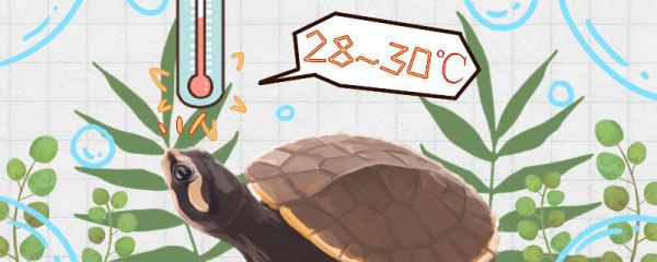 圆澳龟可以冷水过冬吗,怎么过冬