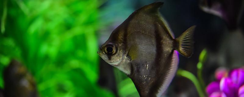 热带鱼能活多久,热带鱼的寿命多久