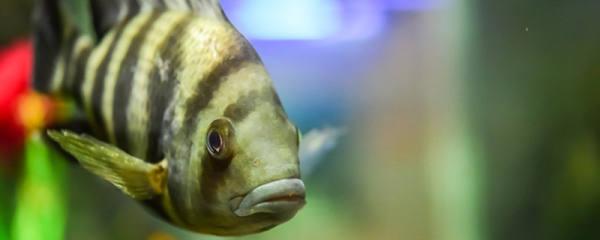 热带鱼怎么换水,养热带鱼多久换一次水