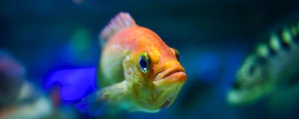 热带鱼怎么养不会死,热带鱼饲养方法