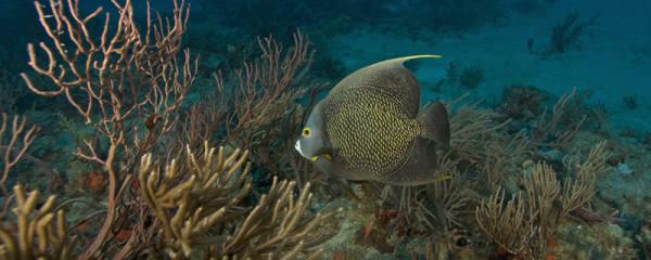 海水鱼怎么养,要怎么才能养好海水观赏鱼