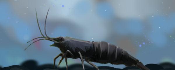 黑壳虾不放底沙可以吗,能裸缸养吗