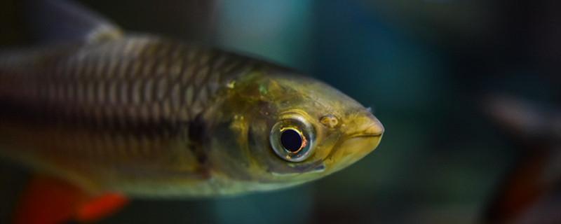 硬骨鱼类有哪些,哪种普通鱼是硬骨鱼-轻博客