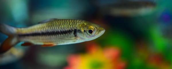 给鱼药浴一次多长时间,怎么正确的给鱼进行药浴