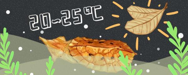 枯叶龟好养吗,怎么养长得快