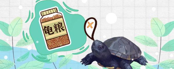 麝香龟不吃东西怎么是什么原因,怎么治疗