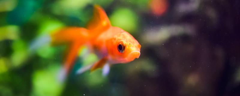 鱼鳍有几种,鱼鳍的作用是什么-轻博客