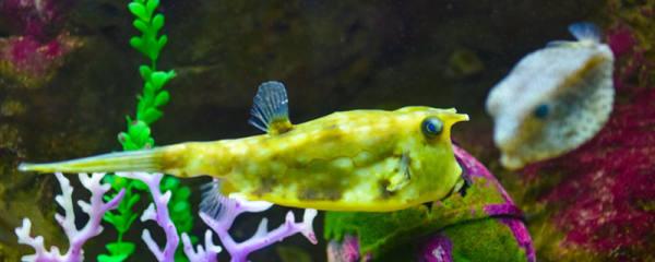鱼缸如何养冷水鱼_鱼缸能用酒精消毒吗,如何给鱼缸消毒 - 鱼百科