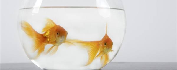 金鱼从鱼缸里跳出来是什么原因,该怎么处理