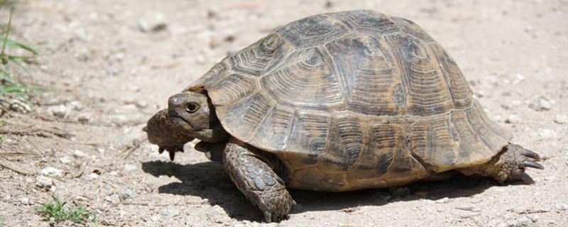 观赏龟好养吗,观赏龟怎么养
