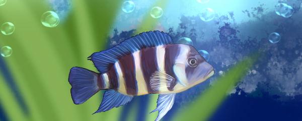 六间鱼好养吗,怎么养
