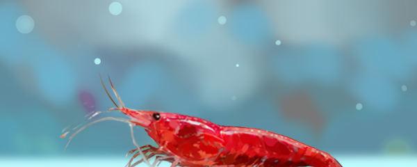 樱花虾吃自己的宝宝吗,小虾要分开养吗