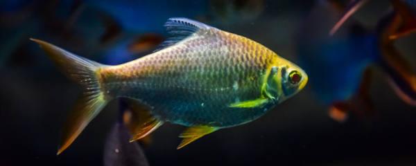 农村适合养什么淡水鱼,经济鱼种有哪些