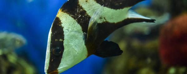 鱼缸中鱼屎的清理妙招,清理鱼屎的方法介绍