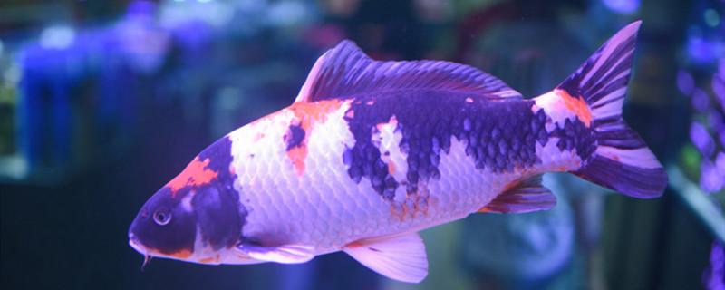怎么判断鱼的年龄,鱼能活几年