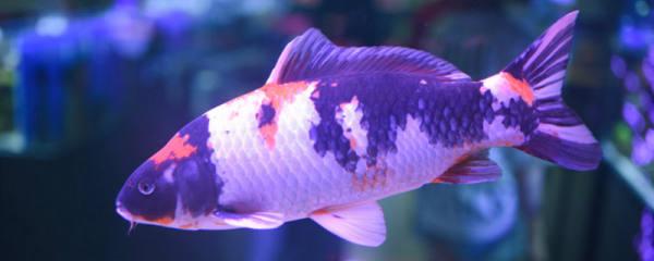 死水塘适合养什么鱼,死水塘如何养鱼